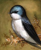 Tree Swallow by BlueBirdie