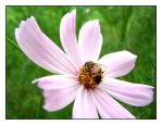 Bee in the Cosmos by kobie