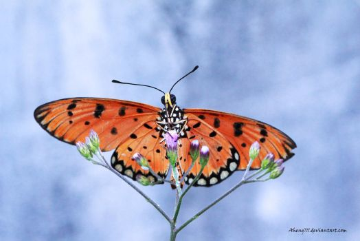 Butterfly by Aheng711