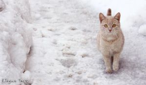 cat in winter by ElaynaTeos
