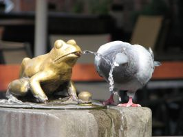 The pigeon and the frog by satane