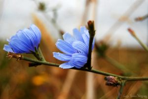 I was once blue by geographu