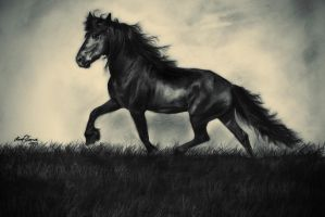 Friesian by InnerComa