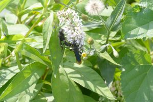 Giant Black Wasps Two Together by Miss-Tbones