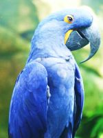 Macaw by t-lee-100
