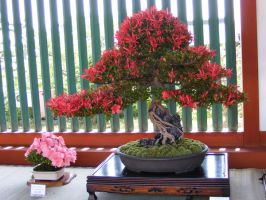 Floral Bonsai by TigrisFirecatcher