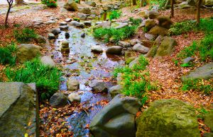 Zojo-ji Springs by Nature-And-Things