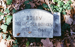 OPC - Bobby the Wonder Monkey by seeker-of-revelation