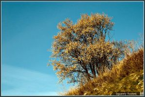 Squarely Rooted by hjhornbeck