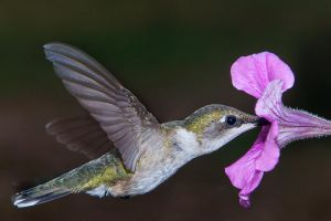nectar nourishment by ariseandrejoice