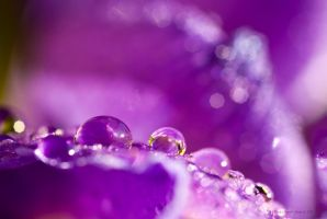 Purple Sparkles by Linda-L