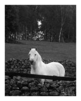White Horse by ElaineSelene