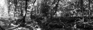 Panorama in the Woods by MikeyHramiak