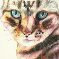 Cat in Oil Pastel by Holllywood