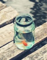 fish in the jar by in-kie