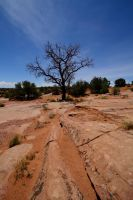 Navajo Tree by Hobgoblin666