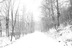 Winter forest... by 13love88