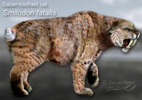 Smilodon fatalis by Dantheman9758