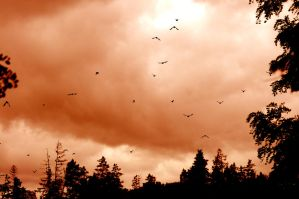 The Birds by wormwood58