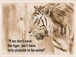 Save the Tiger by bydandphotography