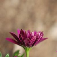 Flowers grow out of dark moments by BlueColoursOfNature