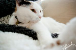 My cat 2. by xJustme