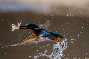 Splash by Perseus67