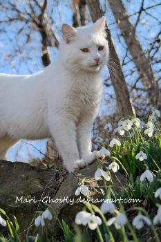 cat in snowdrops by Mari-Ghostly