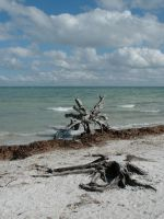Captiva 034 by Peace-of-Art by Peace-of-Art
