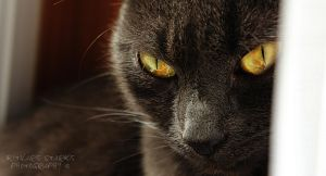 My UK cat. by SCHTARKs-FOTO