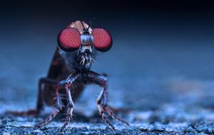 Robberfly in Fall by Enkased