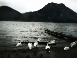 Swan Lake or so.. by pandorax93