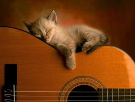 Guitar and a cat by Wonderfulgirl16