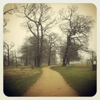 Another morning in Richmond Park by Coco-Poppins