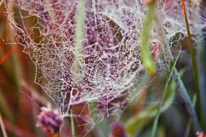 Morning spiderweb by fotografka