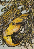 Weaver   ACEO by silverybeast