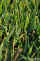 Water Droplets on the Grass by AllAboutDianne