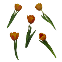 tulips PNG by Amalus