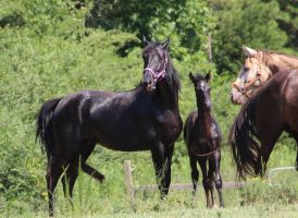 Mare and Foal 12 by MountainViewStock