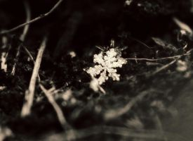 First snow flake by Samantha-meglioli