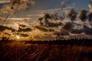 Sunset Rucphense heider by Elianneke