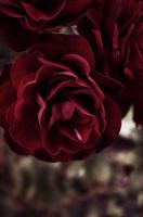 The Western Rose by msteenphotographer