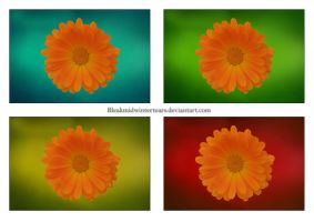 Flowers by Habanbo