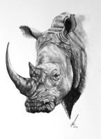 White Rhino by salt25