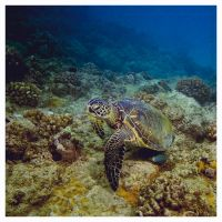 Squirt... by PacIslander2