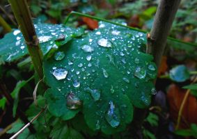 Droplets on a leaf by flegom