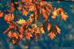 magical autumn by Iulian-dA-gallery