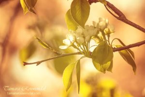 Bloom by TammyPhotography