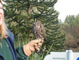 Zoo Trip: Western Screech Owl by AnimePeep33