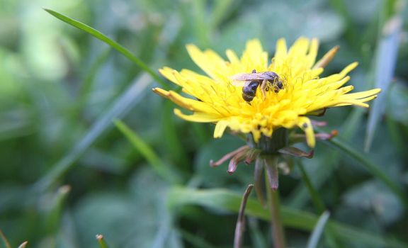A busy bee by Claire991